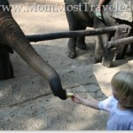WW: Mae Sa Elephant Camp, Chiang Mai, Thailand