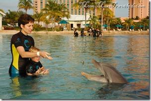 DolphinFeedMama